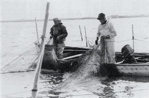Et liv som fisker ved Nissum Fjord